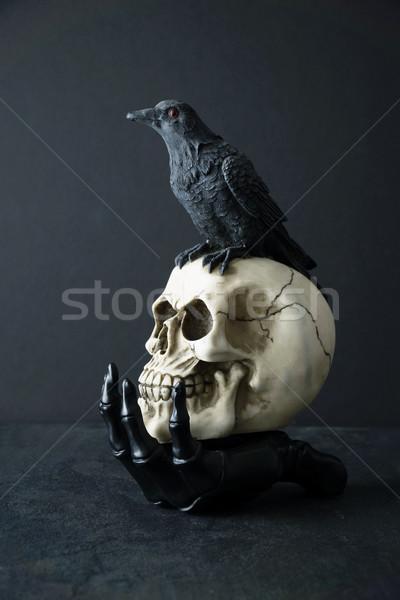 Photo stock: Crâne · noir · oiseau · squelette · main · fond