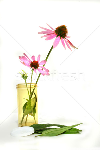 Echinacea coneflower in precription container Stock photo © Sandralise