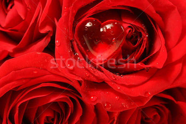 Close-up of a rose with red heart on petal Stock photo © Sandralise