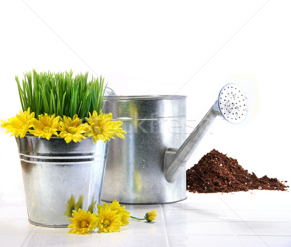 Garden pot with grass, daisies and watering can  Stock photo © Sandralise
