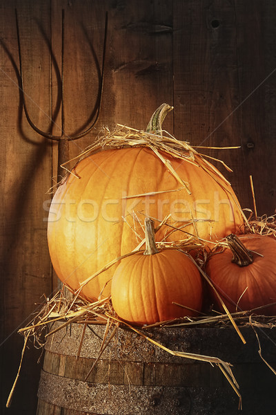 Rustic scene with pumpkins and pitch fork Stock photo © Sandralise
