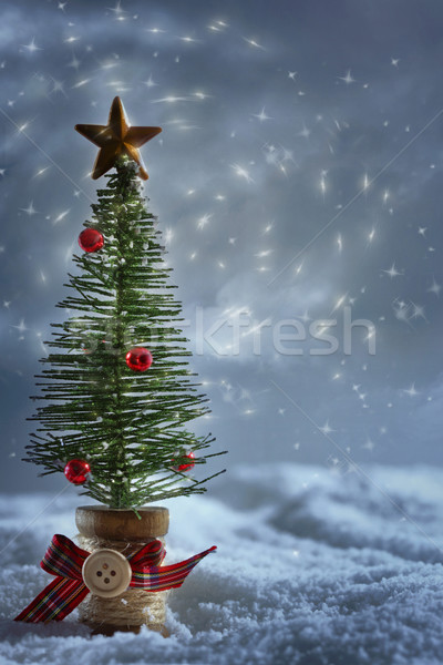 Little tree in snow with starry night background Stock photo © Sandralise