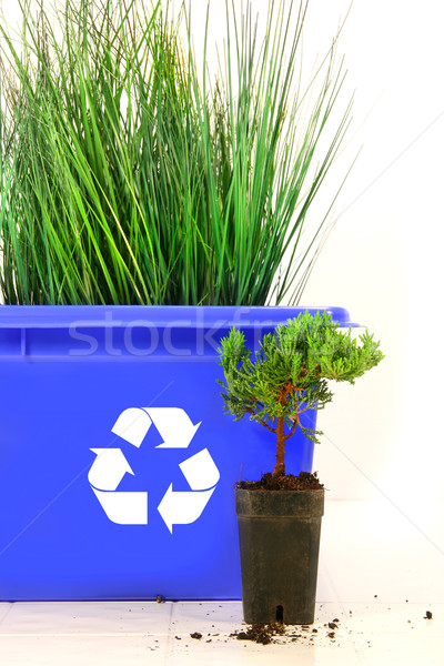 Tall grass inside recycle bin  Stock photo © Sandralise