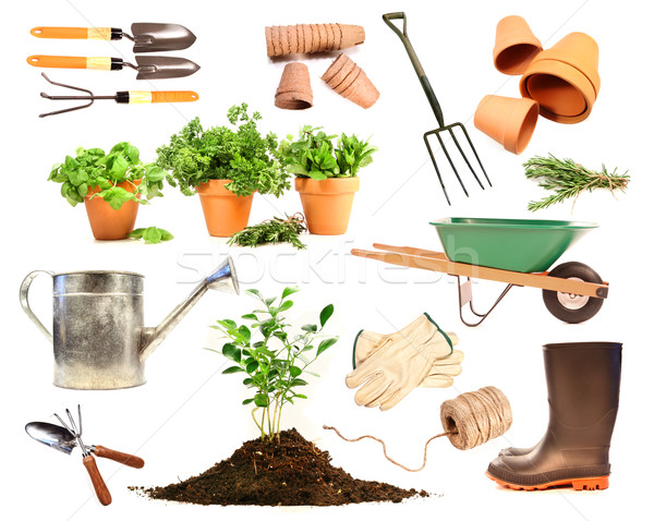 Variety of objects for spring planting on white Stock photo © Sandralise