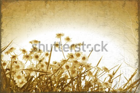 Late summer field of wild dill Stock photo © Sandralise