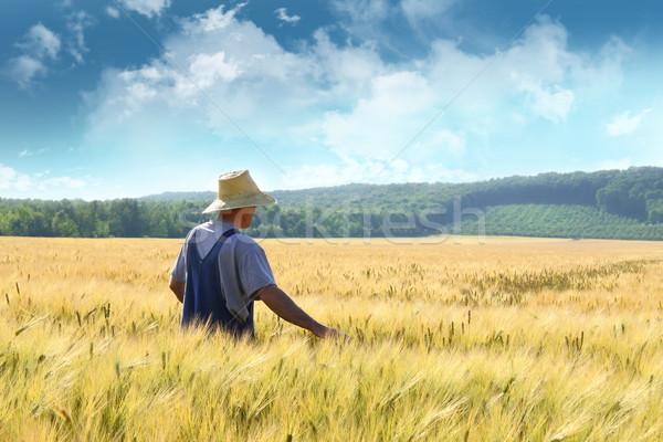 Landbouwer lopen gouden voedsel man Stockfoto © Sandralise
