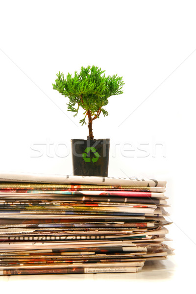 Plant on top of pile of newspapers Stock photo © Sandralise