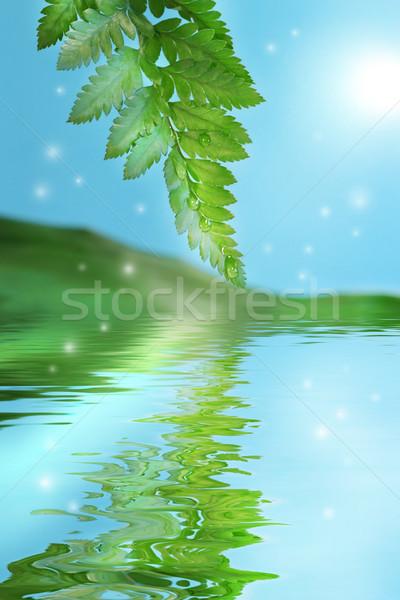 Zöld páfrányok víz tükröződés égbolt tavasz Stock fotó © Sandralise