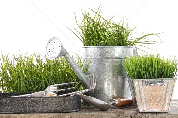Garden tools and watering can with grass Stock photo © Sandralise
