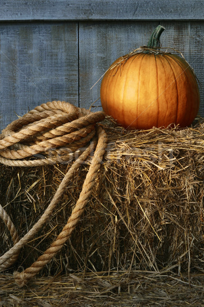 Large pumpkin with rope on hay  Stock photo © Sandralise