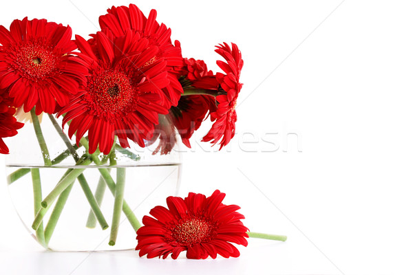 Stock photo: Closeup od red gerber daisies in glass vase