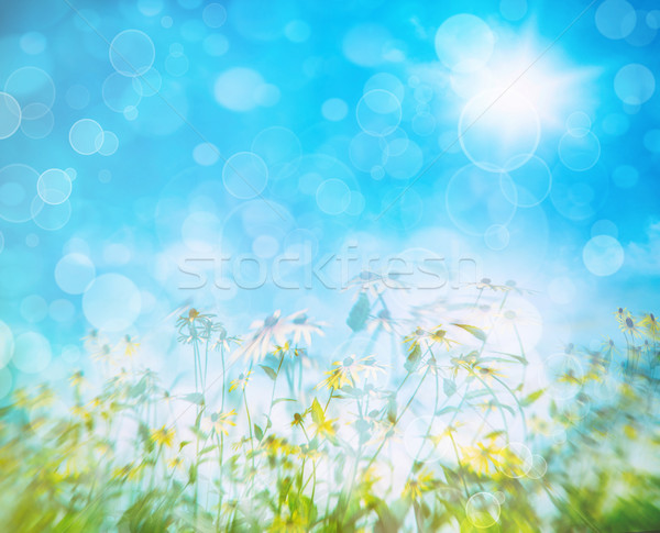 Summer flowers against a blue sky Stock photo © Sandralise