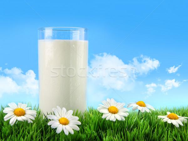 ストックフォト: ガラス · ミルク · 草 · ヒナギク · 青空 · 花