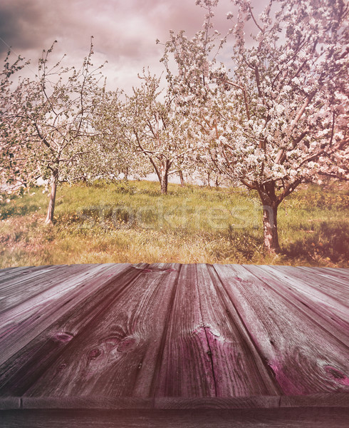 Houten appelboomgaard oude boom hout Stockfoto © Sandralise