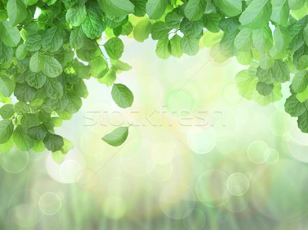 весны листьев эффект солнце свет дизайна Сток-фото © Sandralise