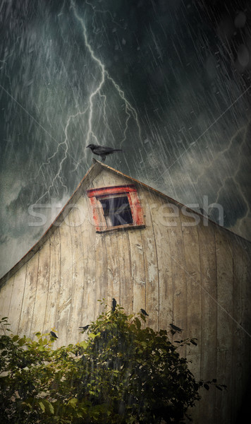 Spooky old barn with crows on a stormy night Stock photo © Sandralise
