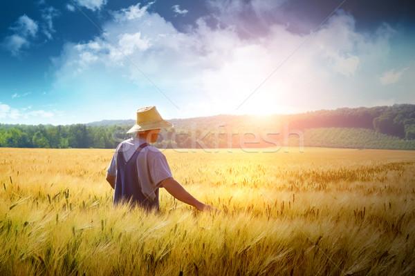 Farmer walking through a wheat field Stock photo © Sandralise