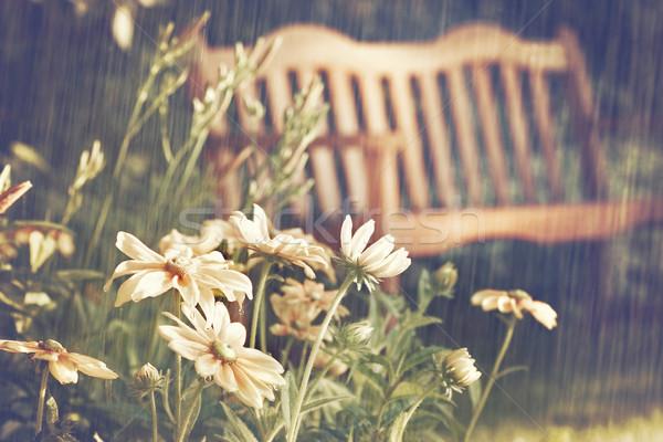 Nyár késő délután fű absztrakt természet Stock fotó © Sandralise