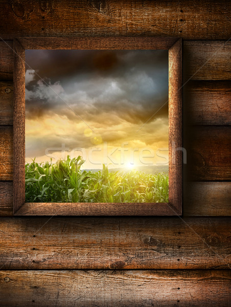 Window with pine wood textured background  Stock photo © Sandralise