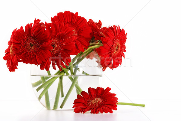Red gerber daisies in glass vase Stock photo © Sandralise