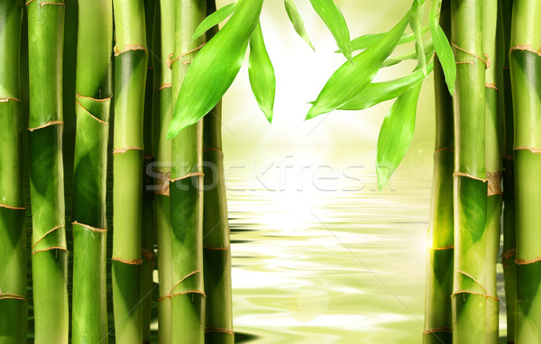 Stock photo: Bamboo shoots stacked side by side