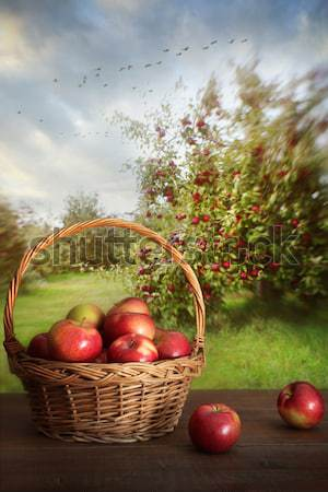 Apples in basket on table in orchard Stock photo © Sandralise