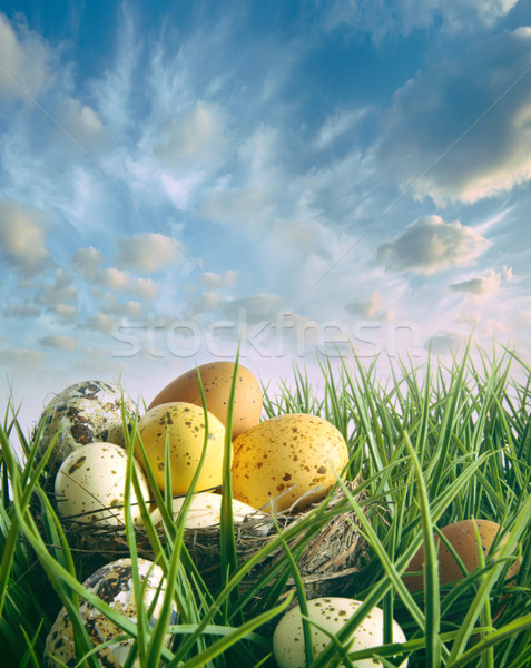 Stock photo: Bird nest with speckled eggs in the grass