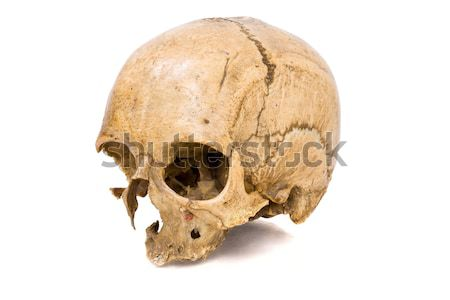 Human Scull Stock photo © sapegina