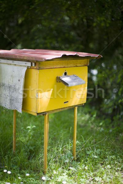 Kovan sarı kırsal arı koloni yaz Stok fotoğraf © sapegina