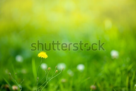 Bahar yukarı çim güzellik uzay Stok fotoğraf © sapegina