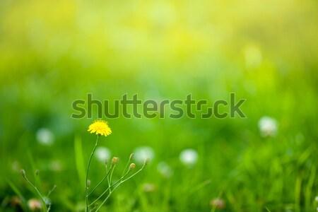 Spring background Stock photo © sapegina