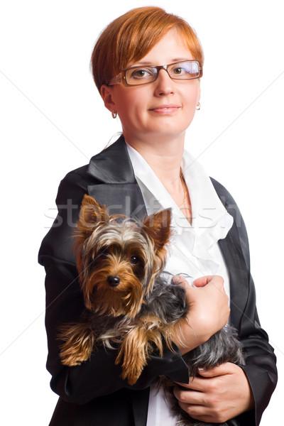 Stok fotoğraf: Iş · kadını · yorkshire · terriyer · yalıtılmış · beyaz