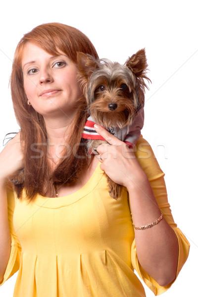 Stockfoto: Vrouw · terriër · yorkshire · geïsoleerd