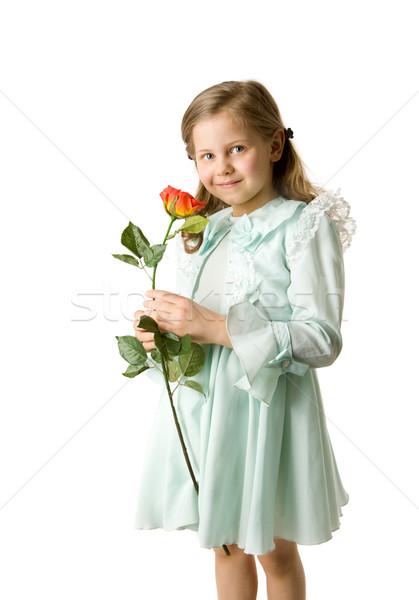 Stok fotoğraf: Kız · gül · küçük · kız · aşağı · bakıyor · yalıtılmış