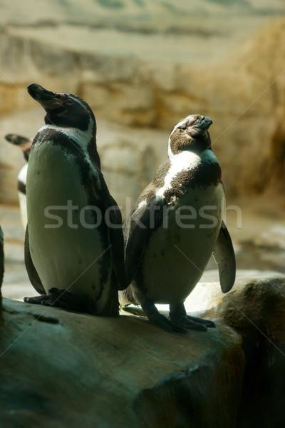 Two penguins Stock photo © sapegina