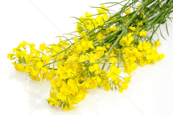 Amarelo branco primavera Foto stock © Saphira