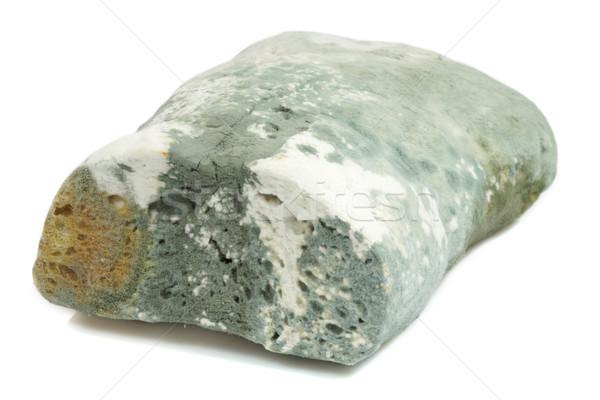 Mold bread Stock photo © Saphira