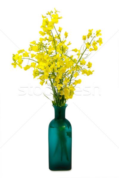 Verkrachting Geel witte voorjaar Stockfoto © Saphira