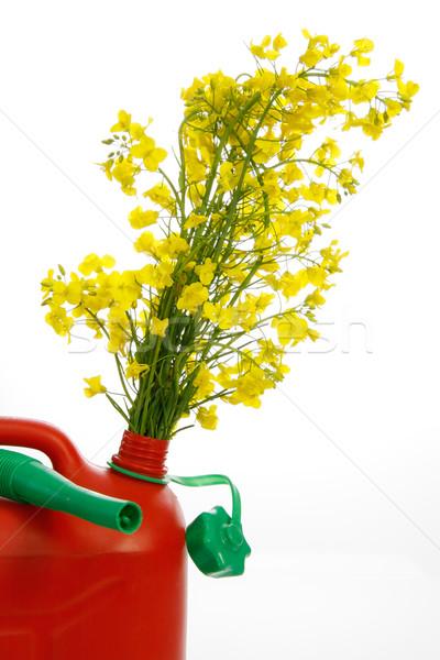 Rojo amarillo violación aislado blanco Foto stock © Saphira