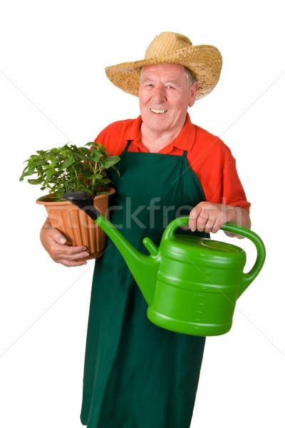 シニア 植木屋 緑 スカート 帽子 ストックフォト © Saphira