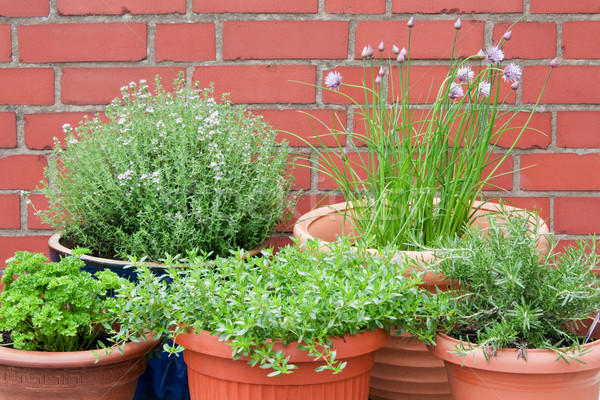 Culinario hierbas diferente aire libre tiro cocina Foto stock © Saphira