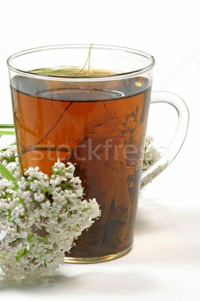 Valerian tea Stock photo © Saphira