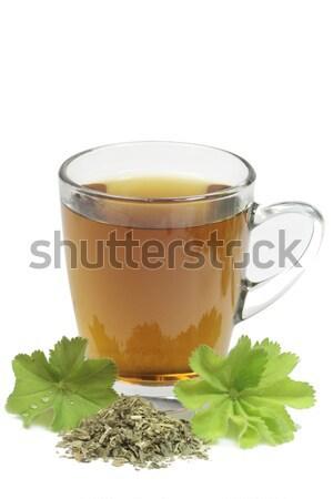 Borsmenta tea gyógynövény tea levelek fehér Stock fotó © Saphira