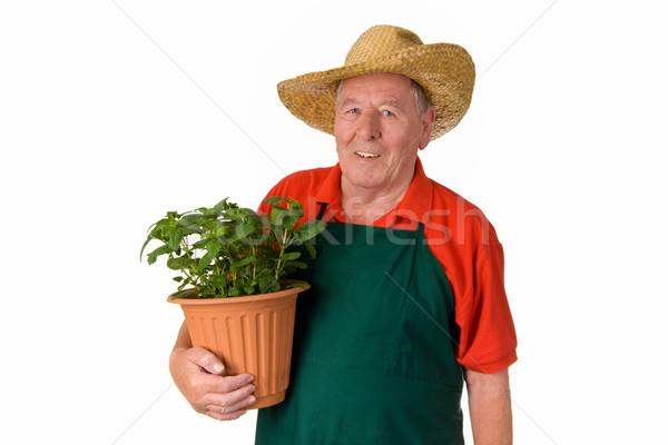 Amateur jardinero ancianos hombre maceta aislado Foto stock © Saphira
