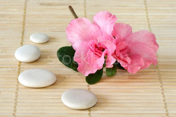 Azalée rose fleur blanche pierres bambou Photo stock © Saphira