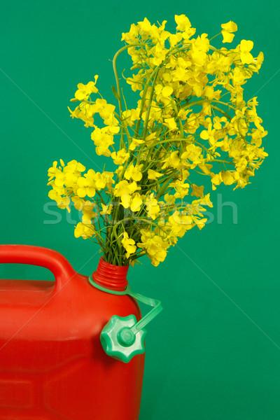 Rojo amarillo violación verde agricultura Foto stock © Saphira