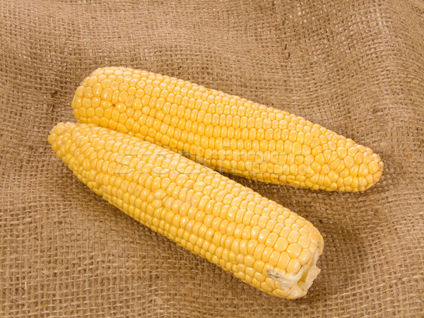 トウモロコシ 2 新鮮な 耳 健康 穀物 ストックフォト © Saphira
