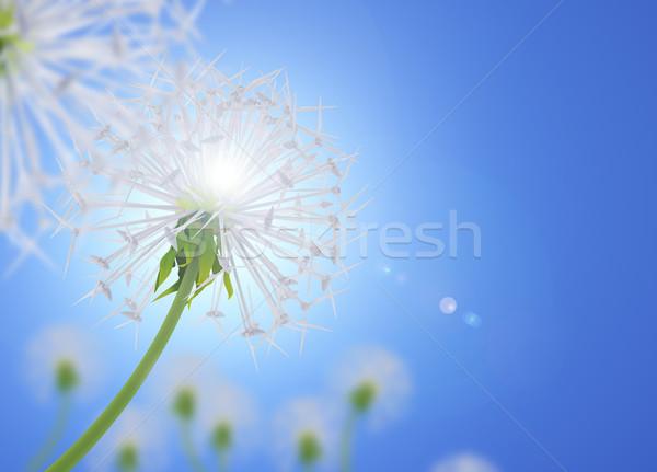 Energii oszczędność Dandelion kwiat kwiaty Zdjęcia stock © Saracin