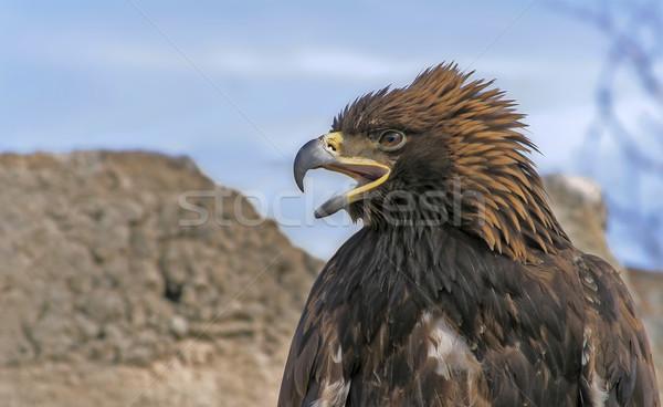 орел открытых клюв небе власти Сток-фото © Saracin