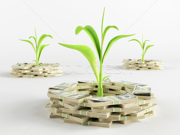 Money germ Stock photo © Saracin